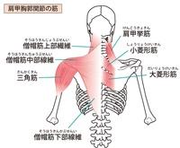 眼精疲労に関連した背中の筋肉