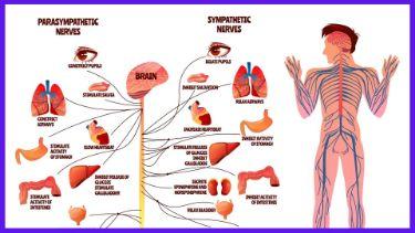 自律神経の調整
