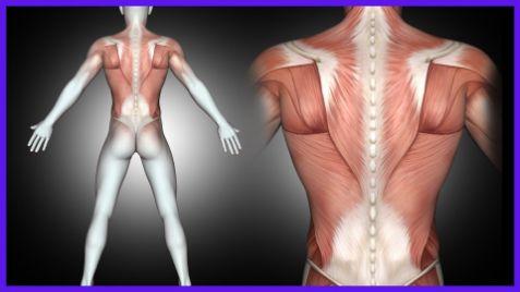 筋肉の痛み
