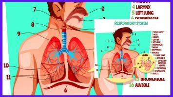 呼吸機能の向上