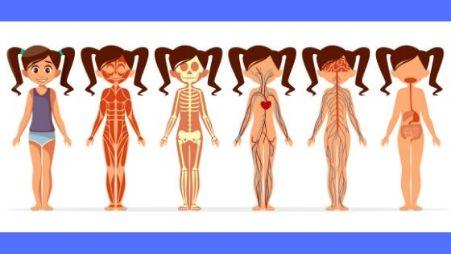 整体鍼灸施術の流れ